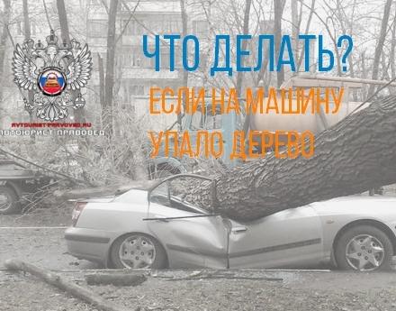 картинка что делать если упало дерево на машину